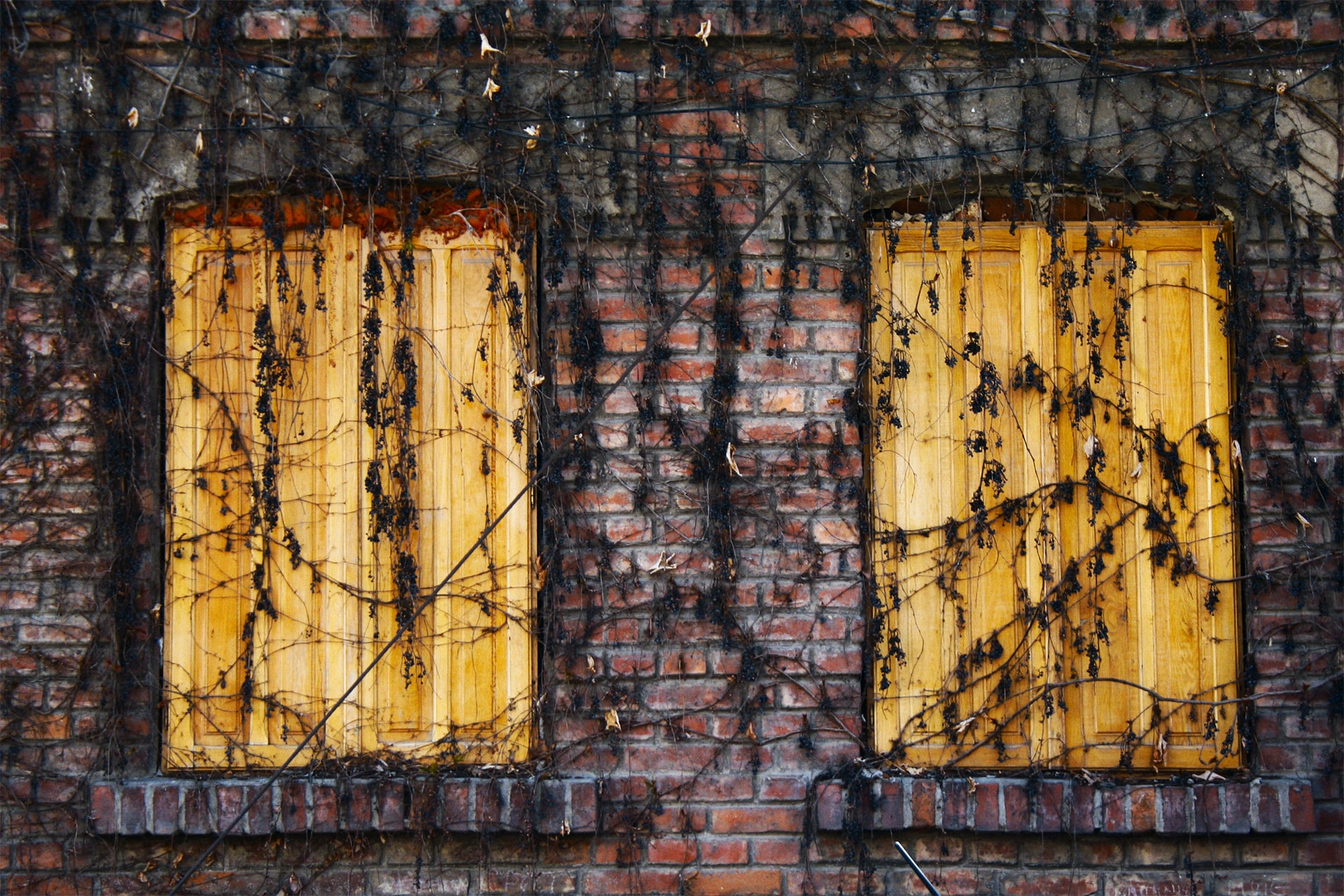 two brown wooden windows covered with withered leaves