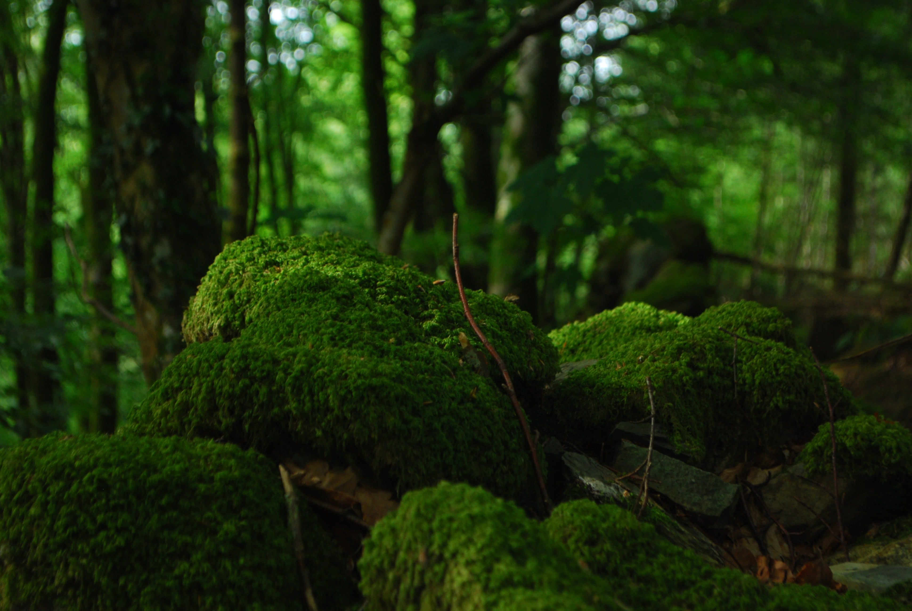A group of rocks covered by a thick layer of moss in the middle of a forest