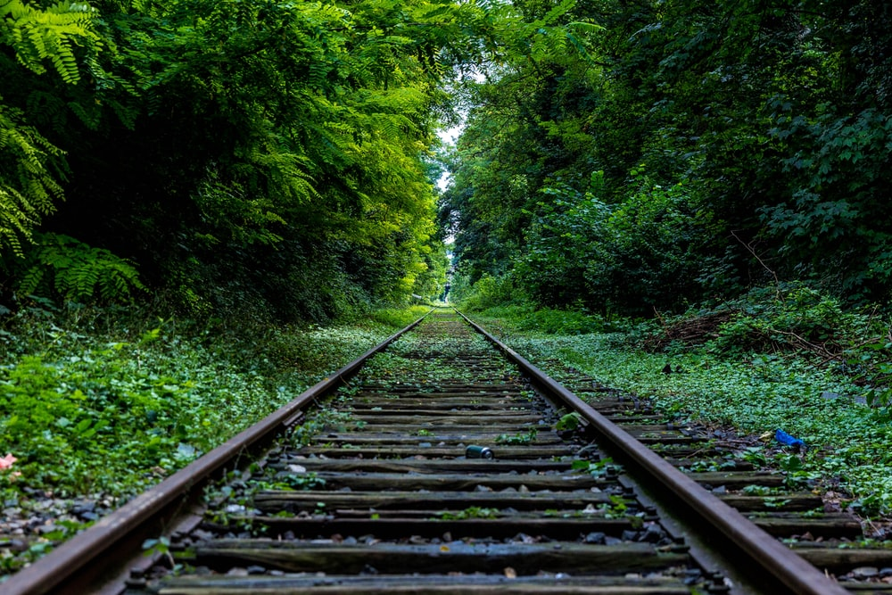 train rail surround by trees