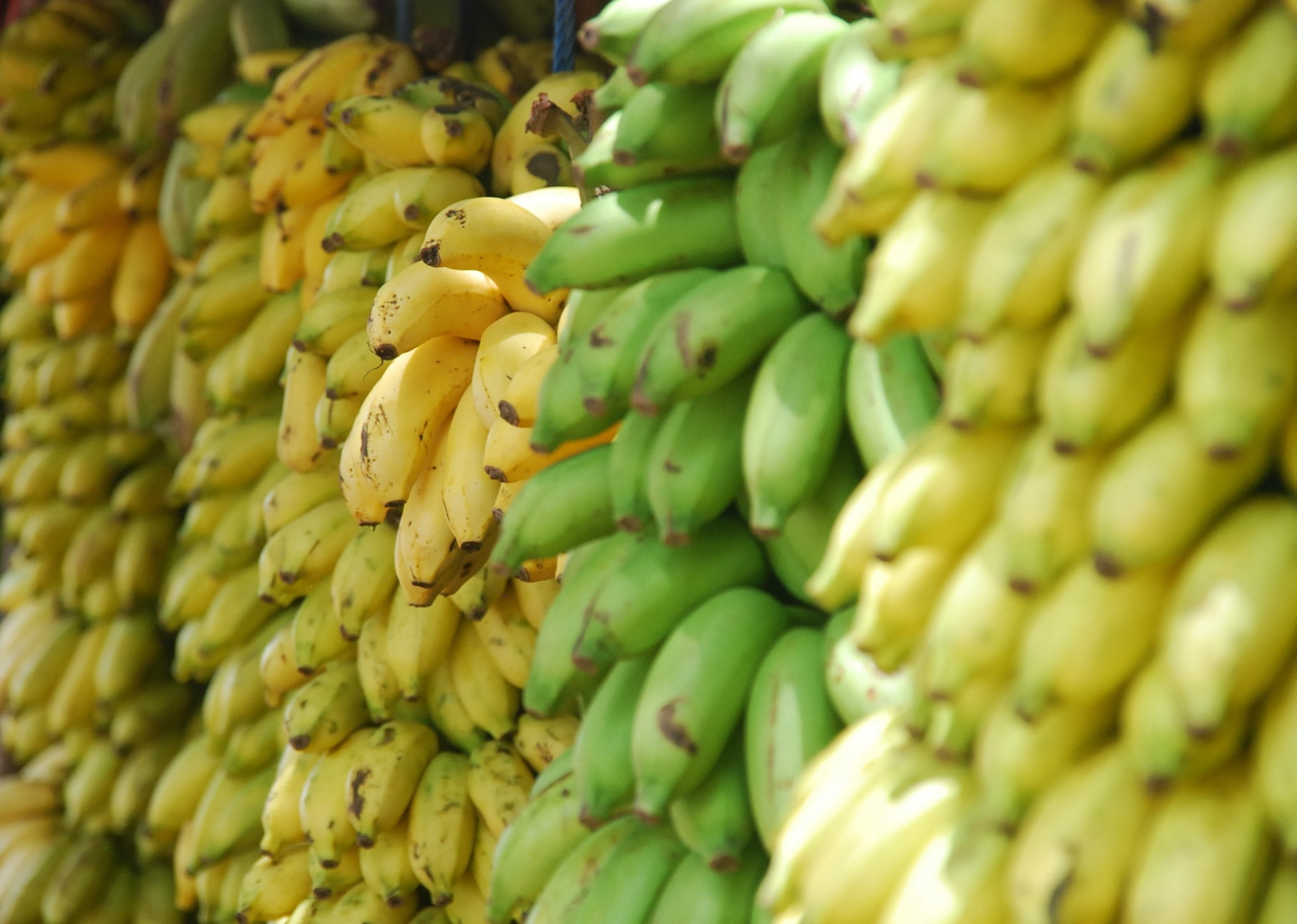 Stacks of yellow and green bananas and raw plantains