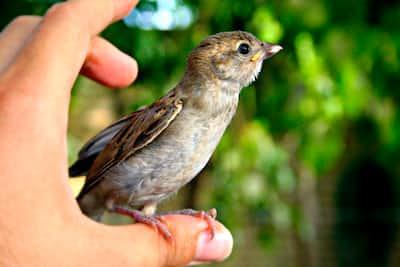 birds are cool  birds stories