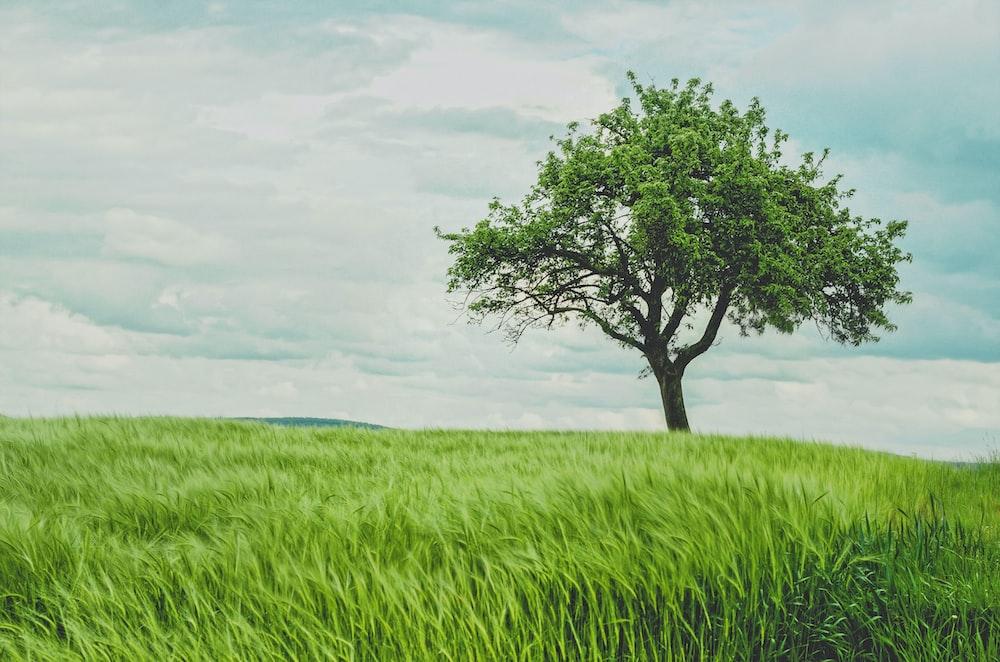 green tree on grassland during daytime