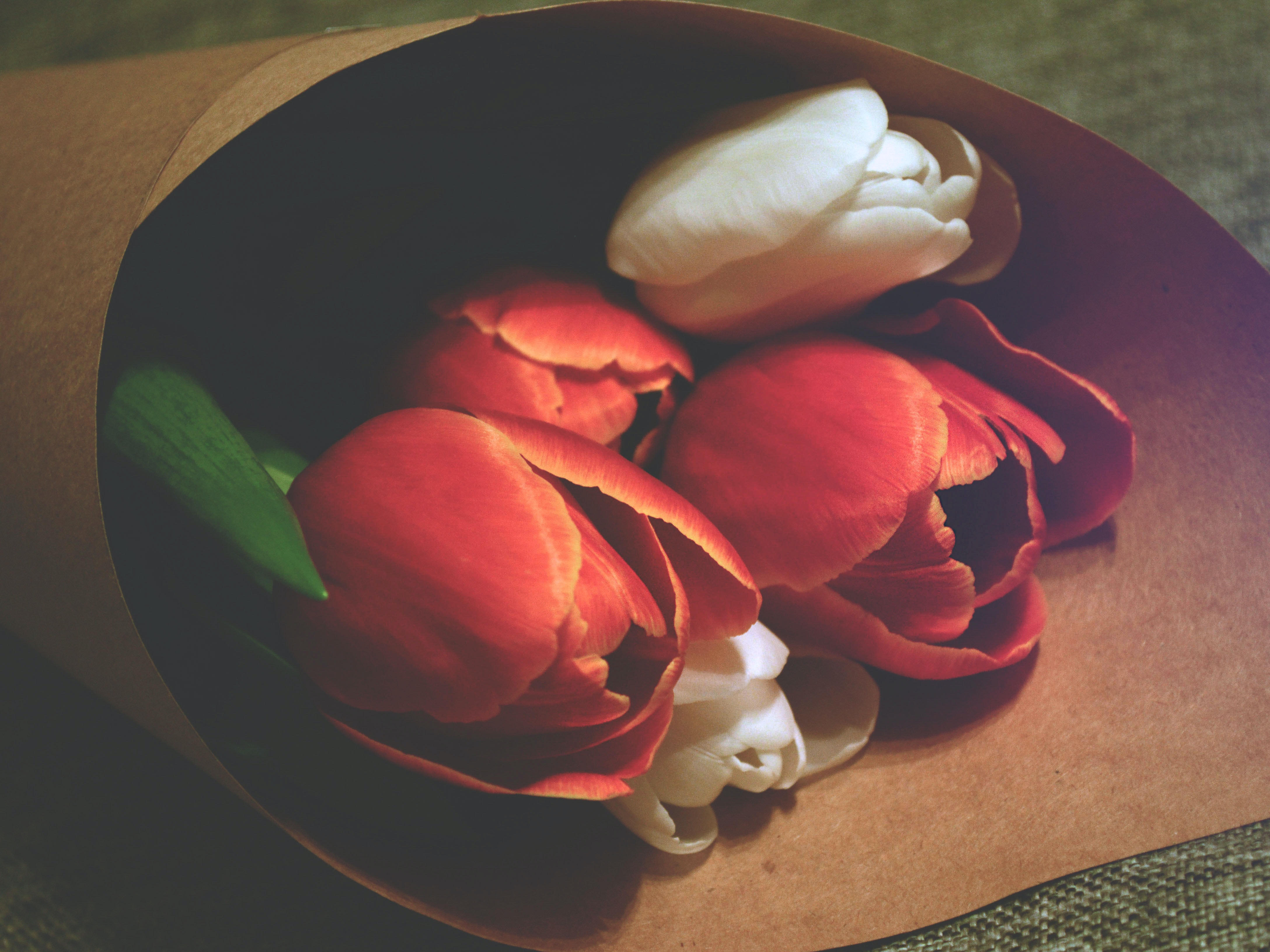 A close-up bouquet of red and white tulips laying on green upholstery