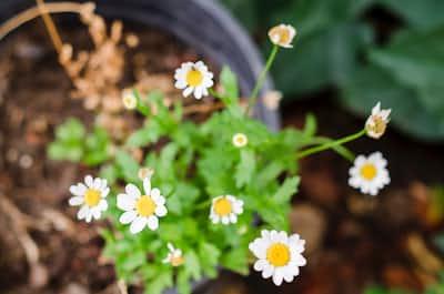 Sisters flowers stories