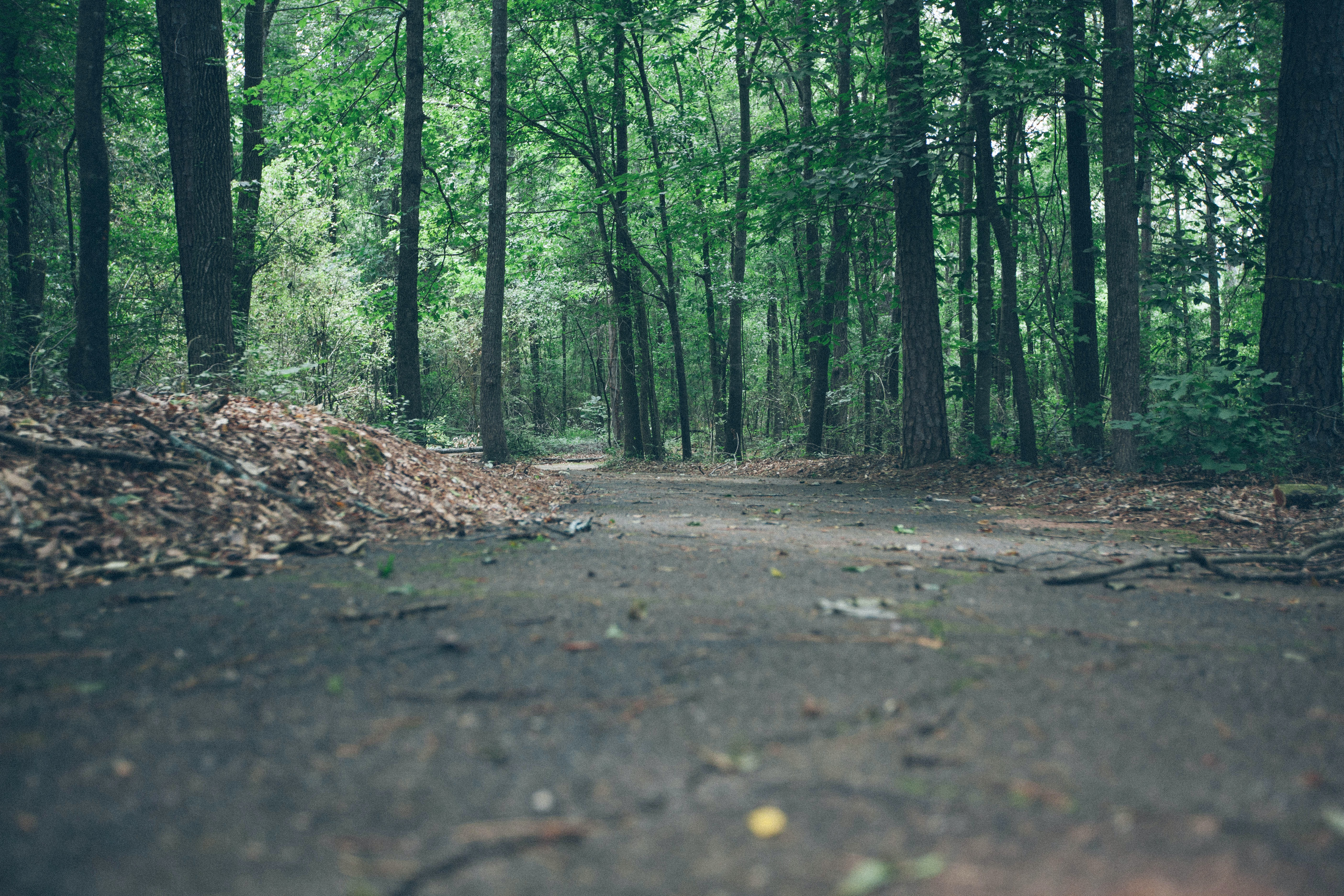 A low shot of an asphalt path in a forest