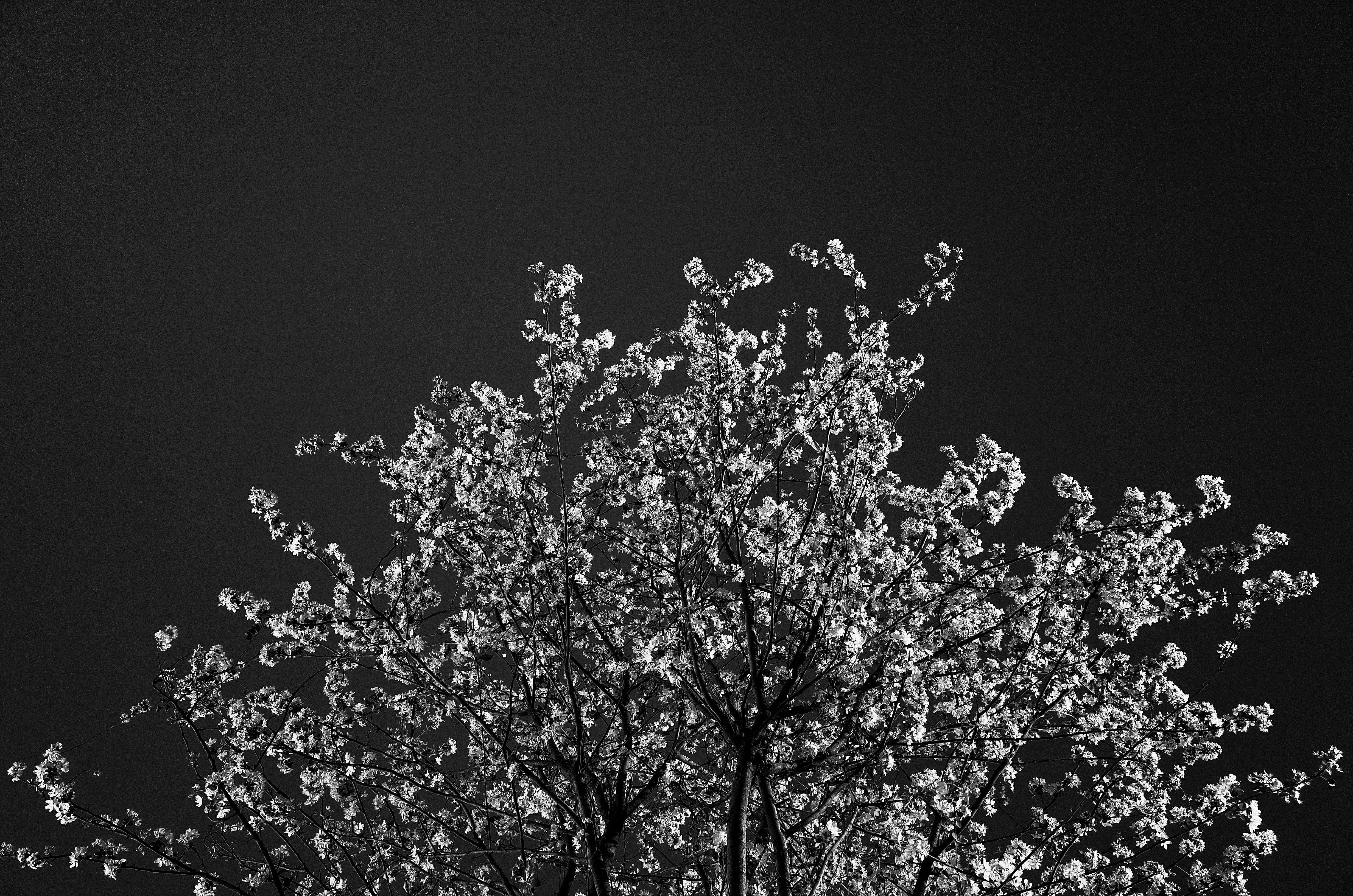 grayscale plant