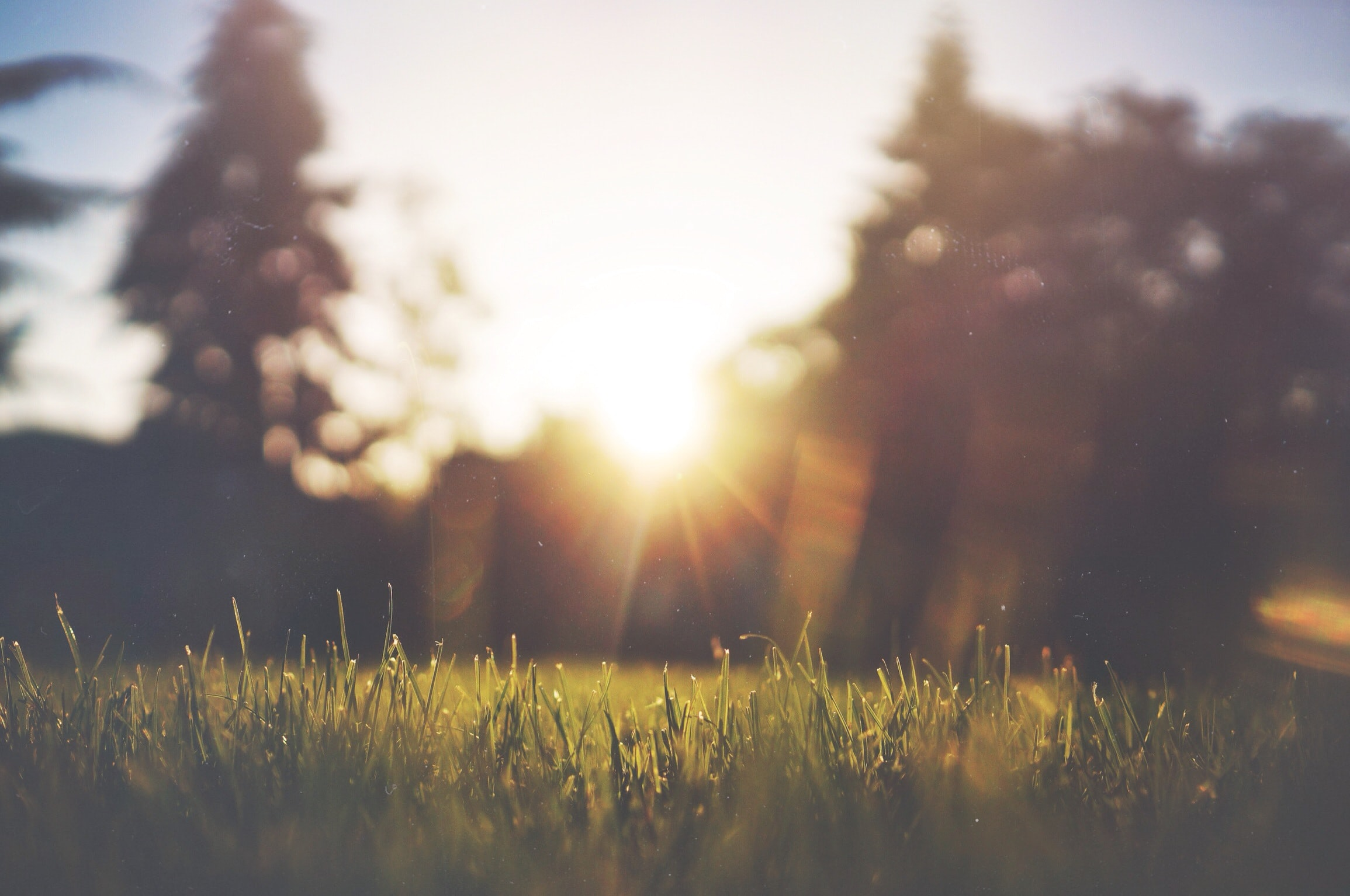 The grass and sun feature in perfect morning picture. Nature can't be more beautiful