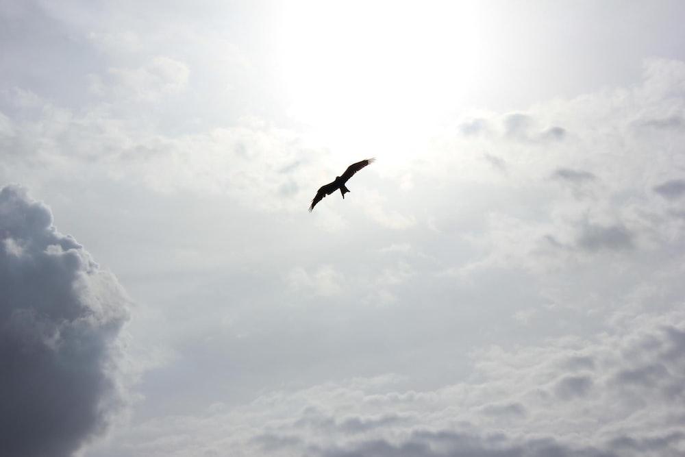 silhouette of bird flying