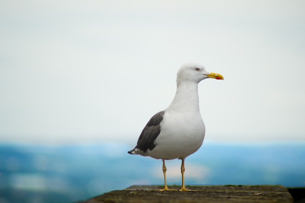white and gray bird standing on concrete platform