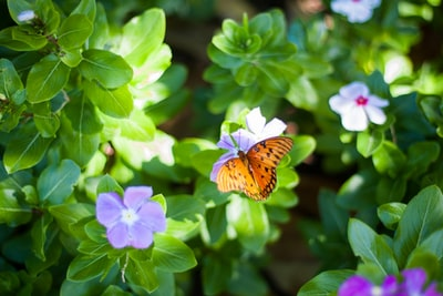 selective focus photography of butterfly on purple petaled flower
