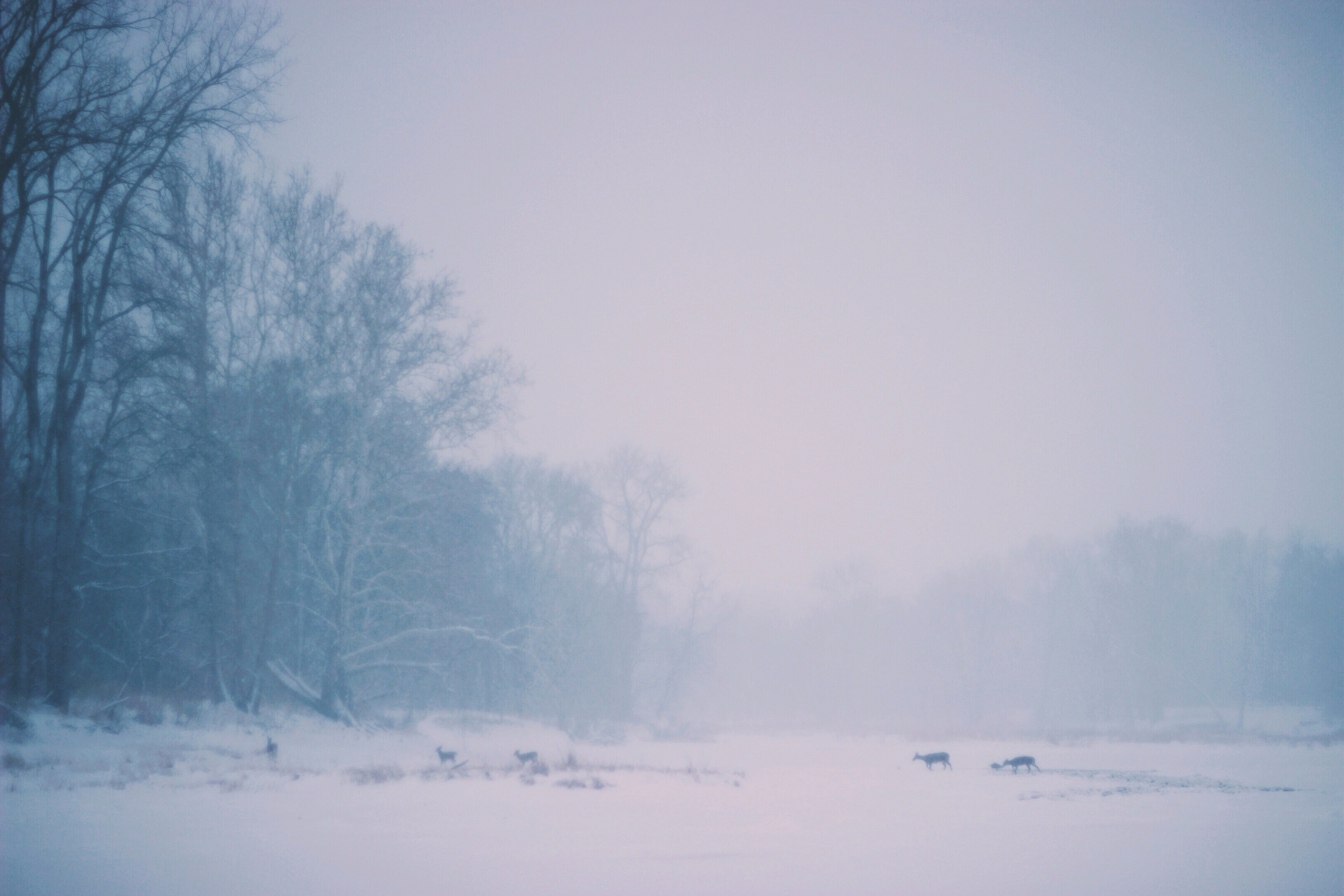 A pale shot of a herd of deers silhouetted against the snow-covered ground