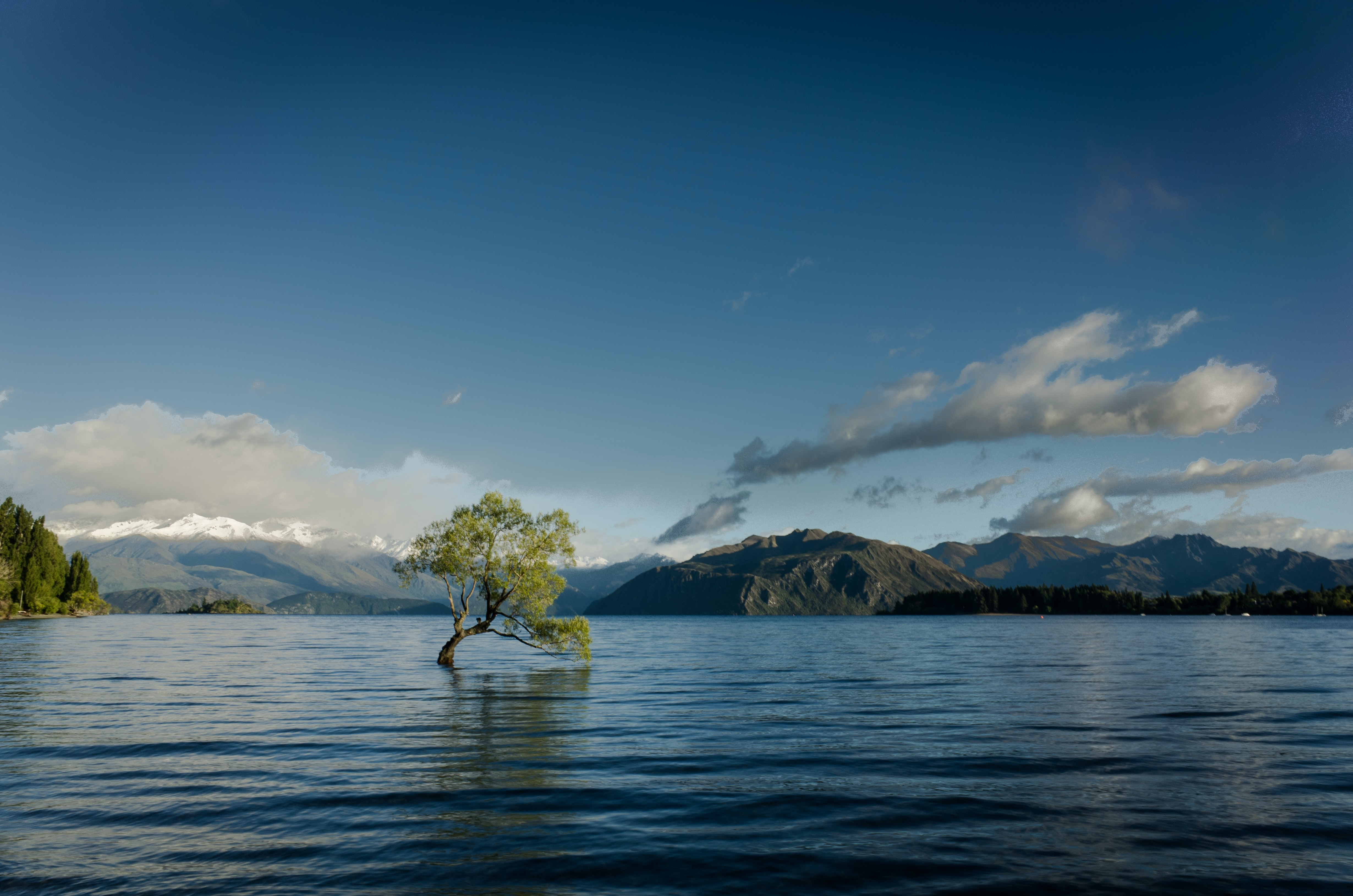 green leafed tree on body of water in landscape photography
