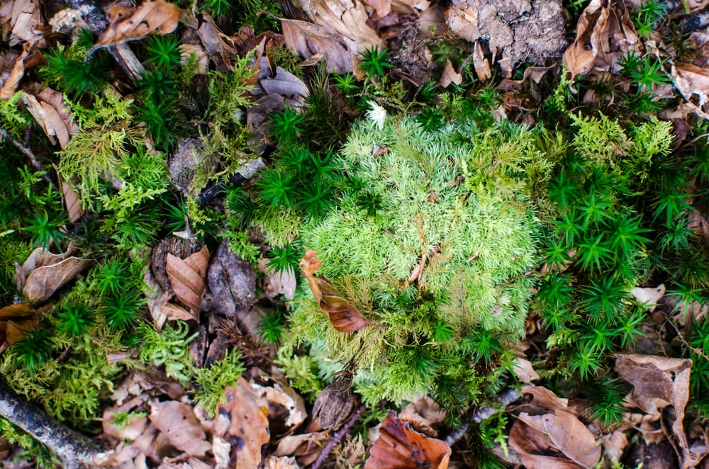 photo of green moss and dried leaf