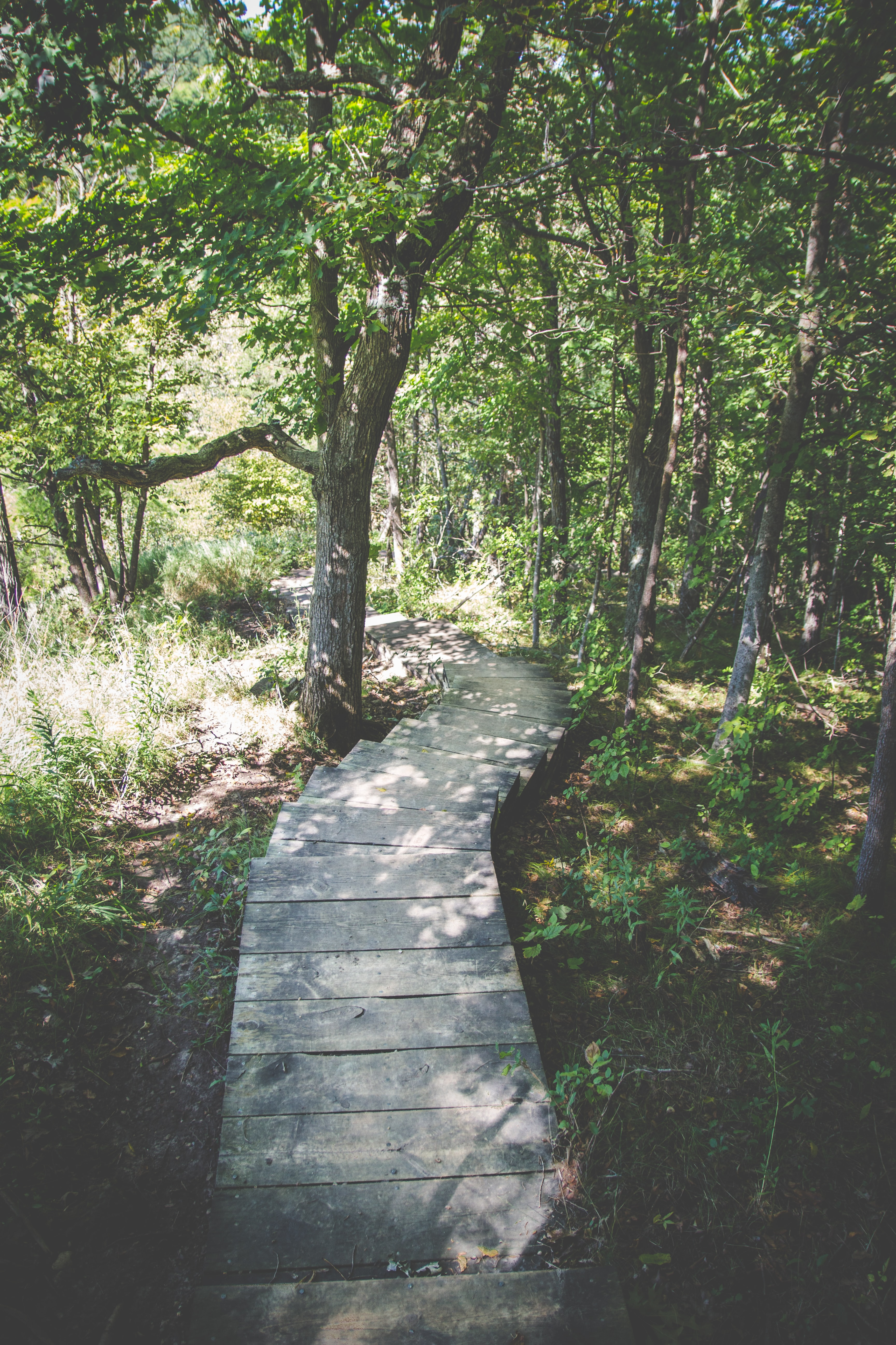 A wooden walkway through a forest