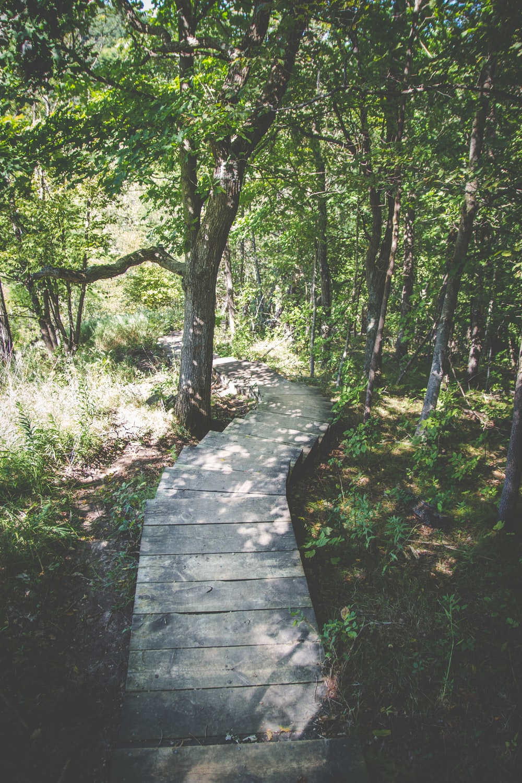 photo of pathway between trees