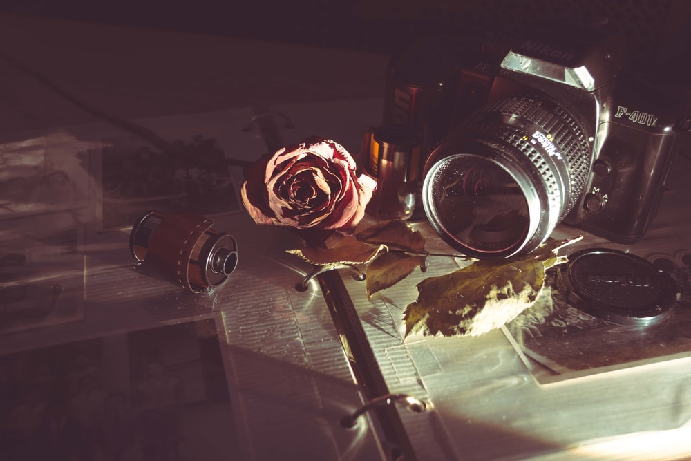 MILC camera beside red rose