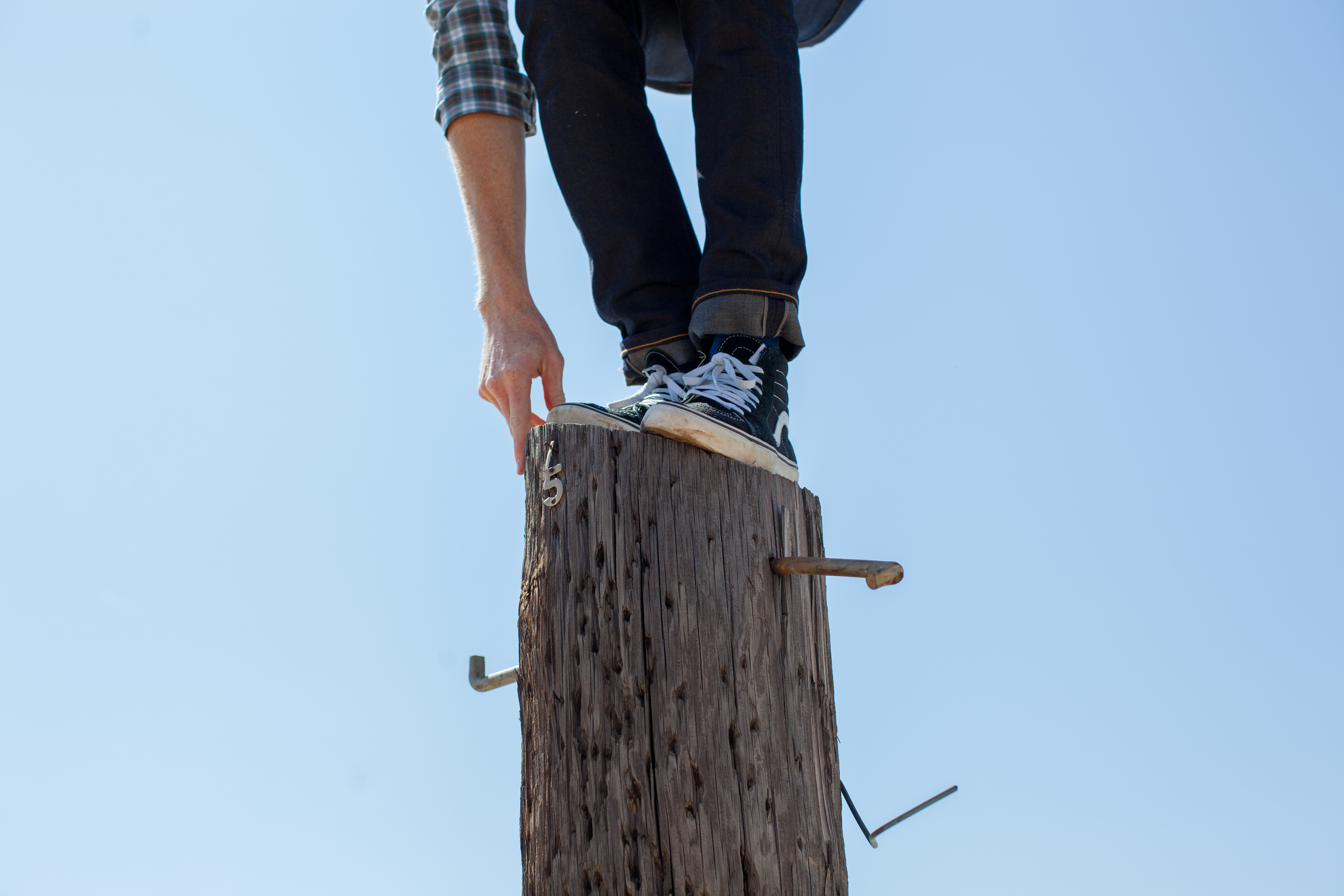 person standing on top of tree