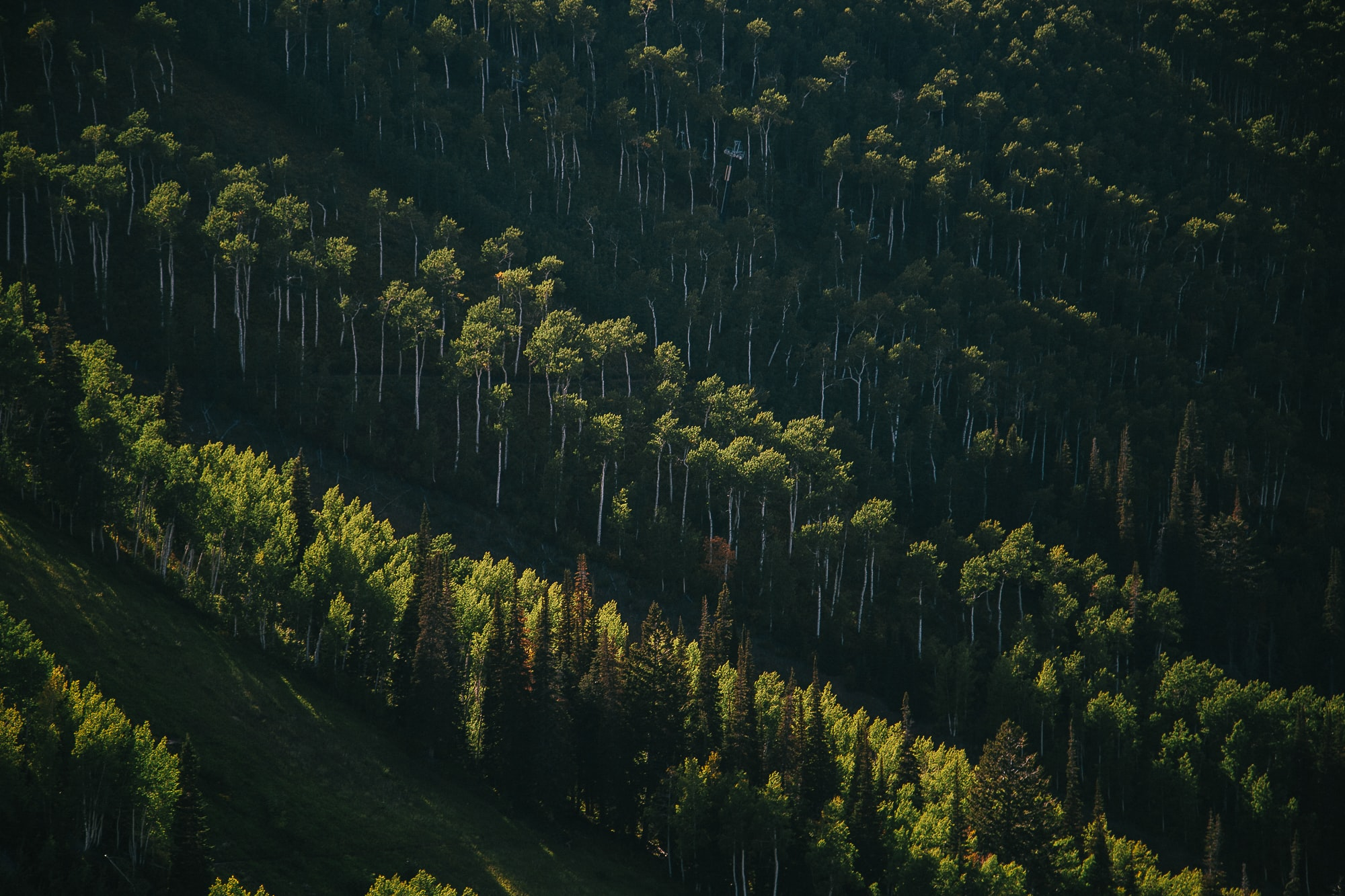 green pine trees in aerial view photography