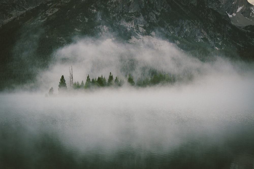 aerial view of forest with fogs at daytime
