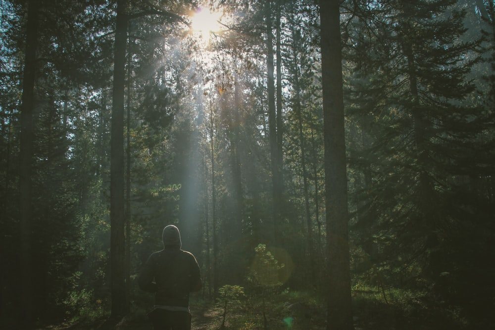 man standing in the forest