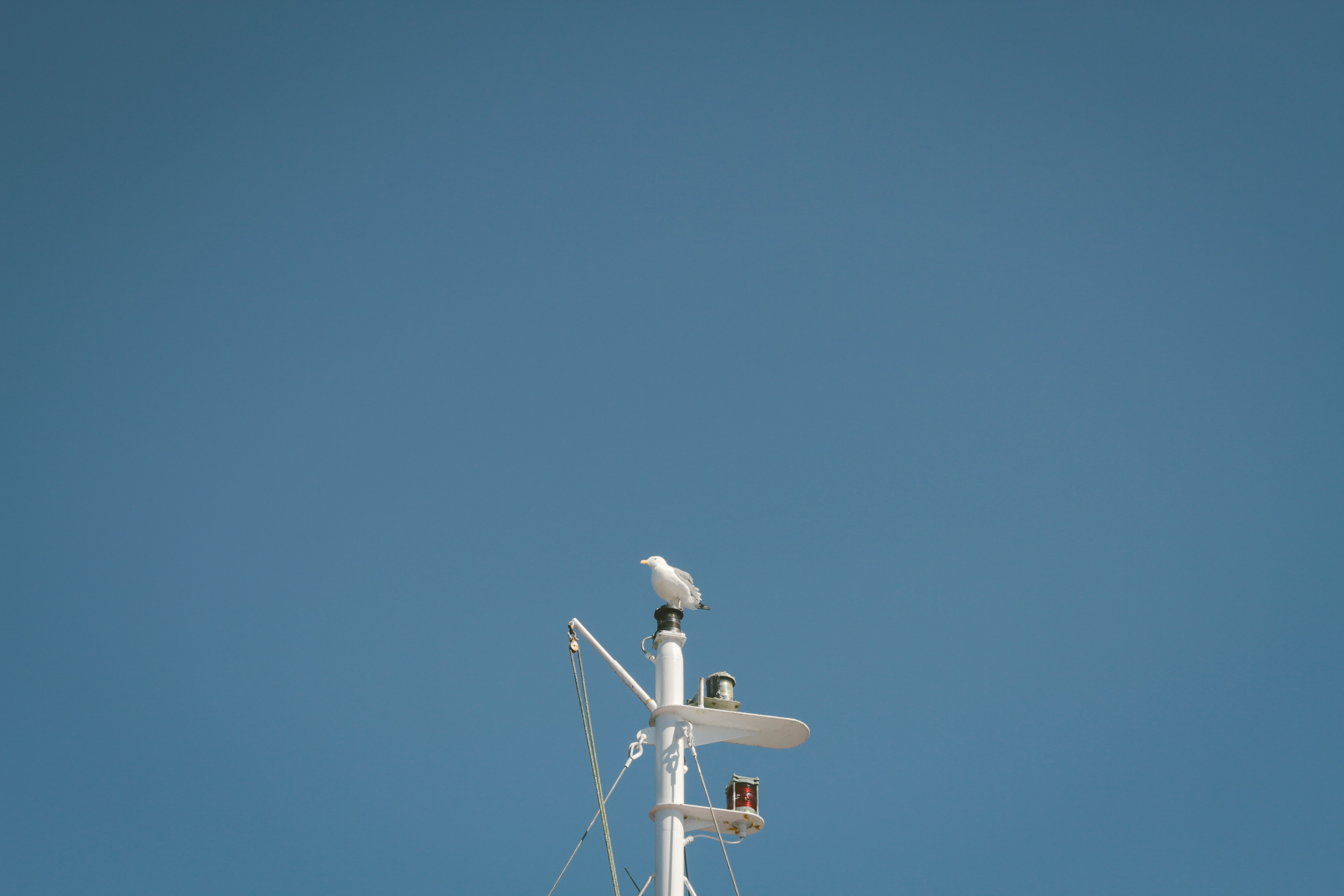 Seagull perched at the top of a boat mast against a blue sky