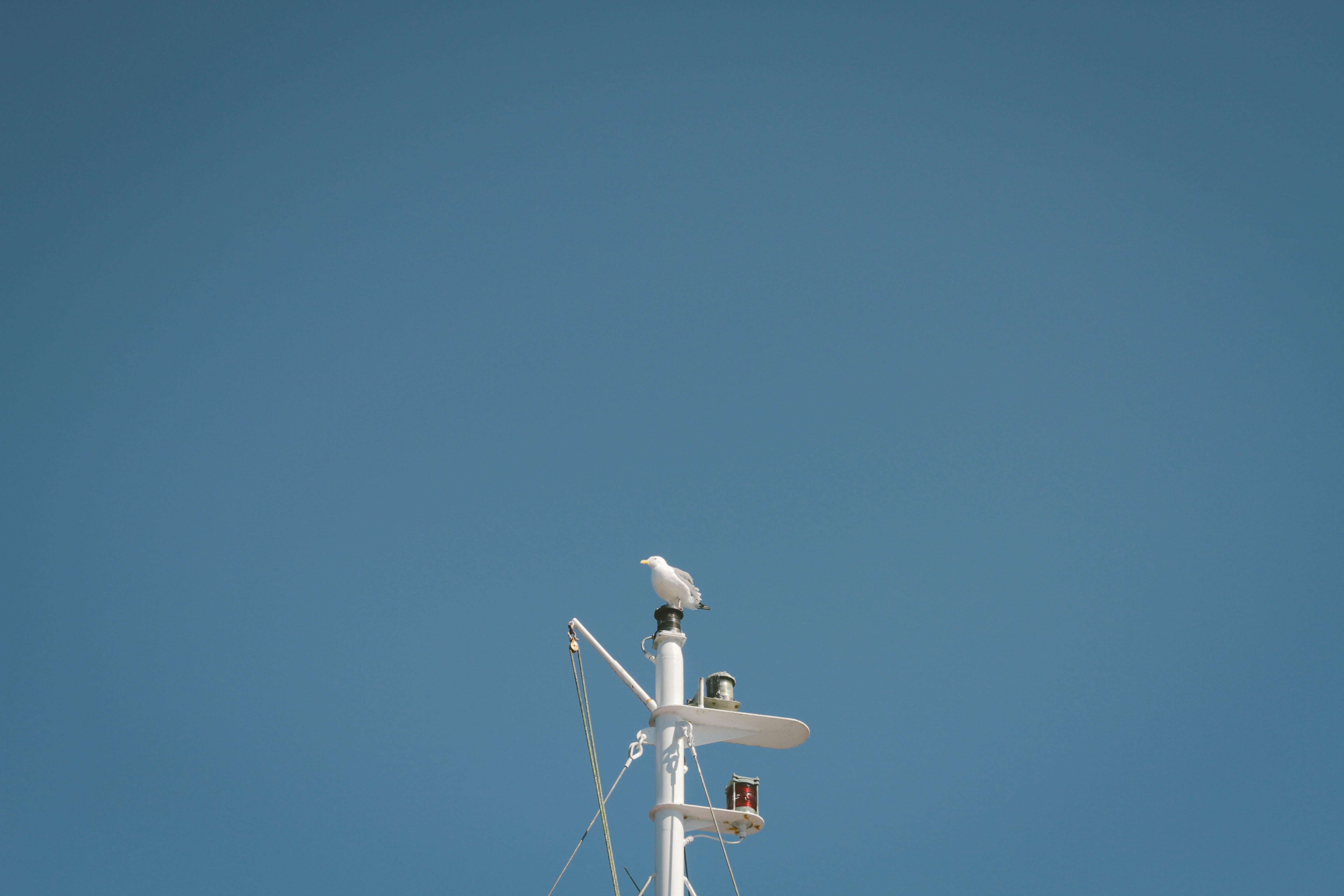 bird on white post