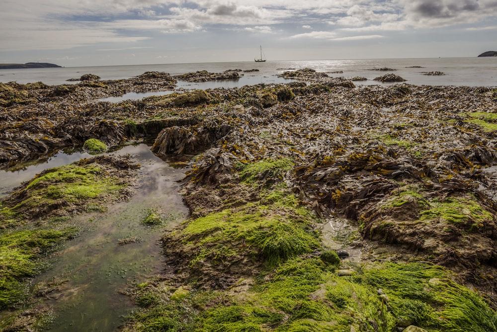 green rocky shore