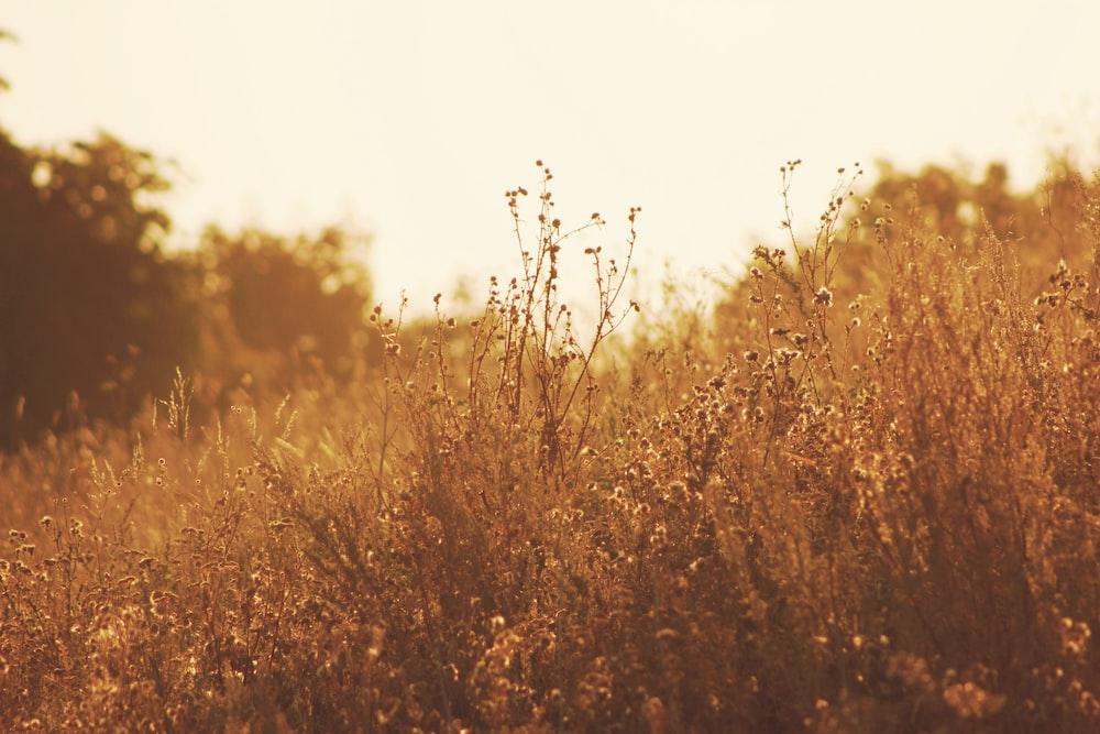 grass field during golden time