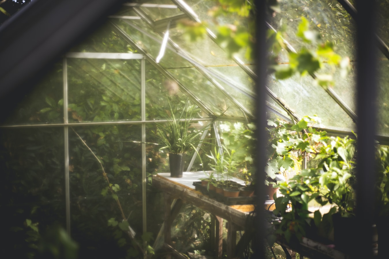 Greenhouse Construction: How to Prep for Spring Planting