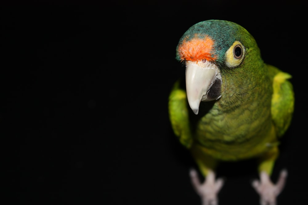 green parrot surrounded by darkness