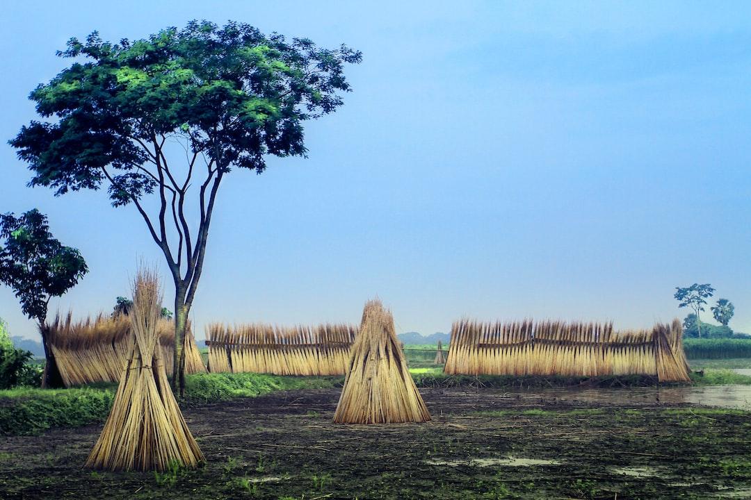 brown hay near green tree