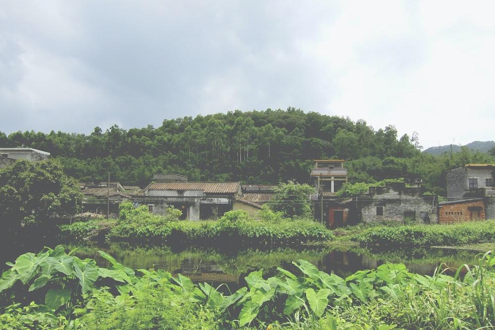 green leafed plants near village