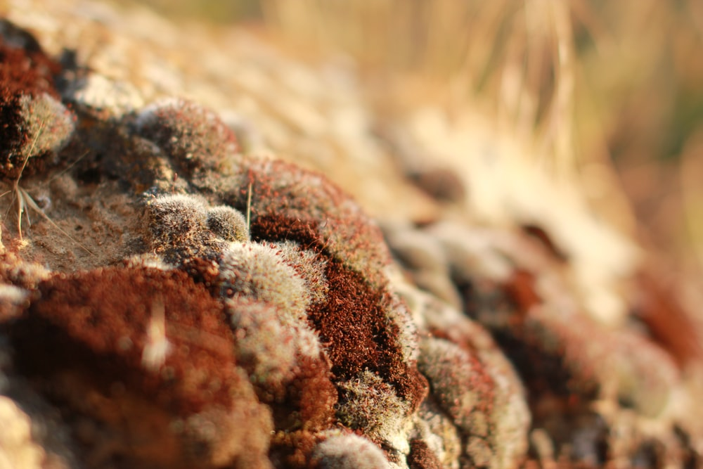 Brown moss grows on rocks in the woods