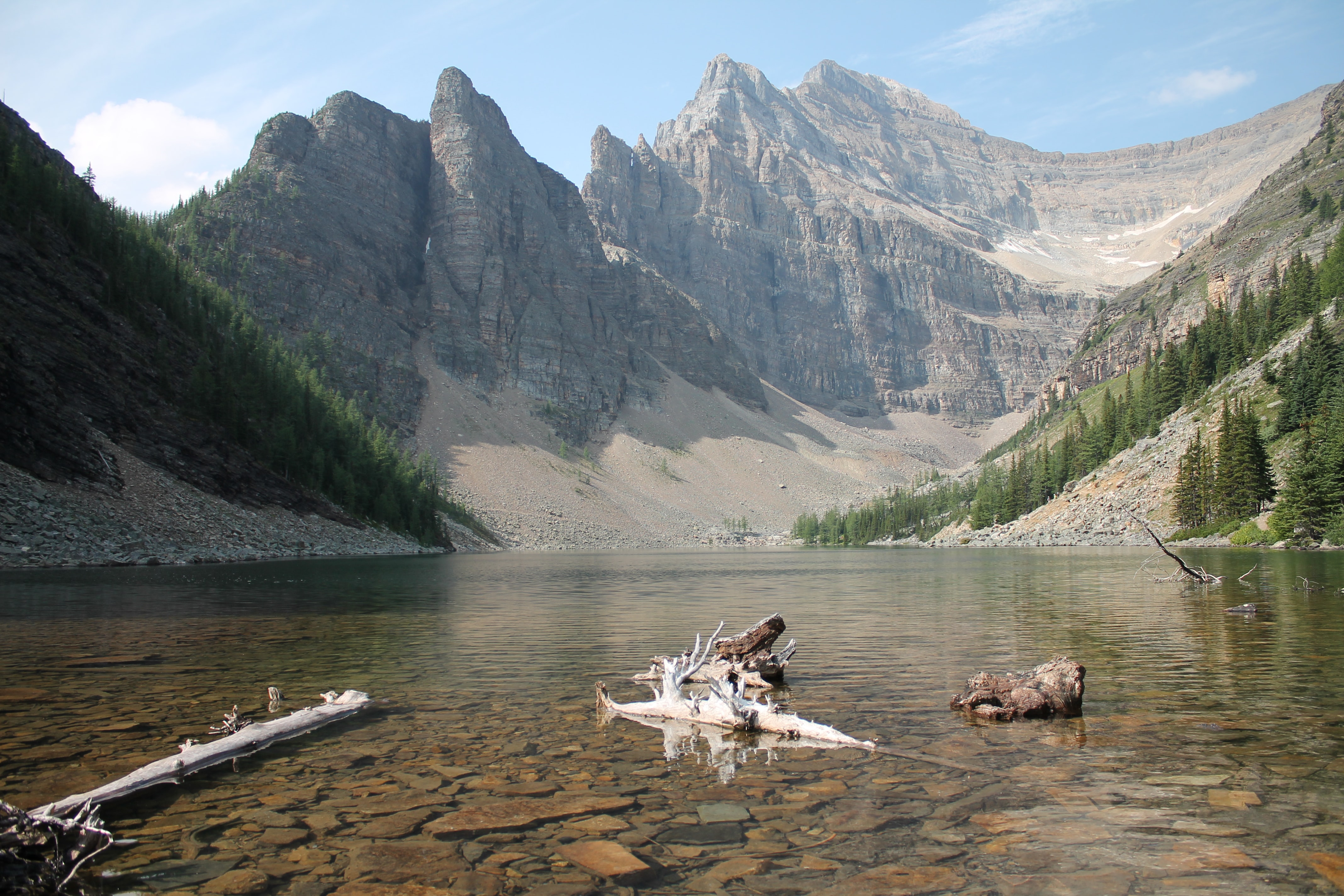 Driftwood in a shallow mountain lake