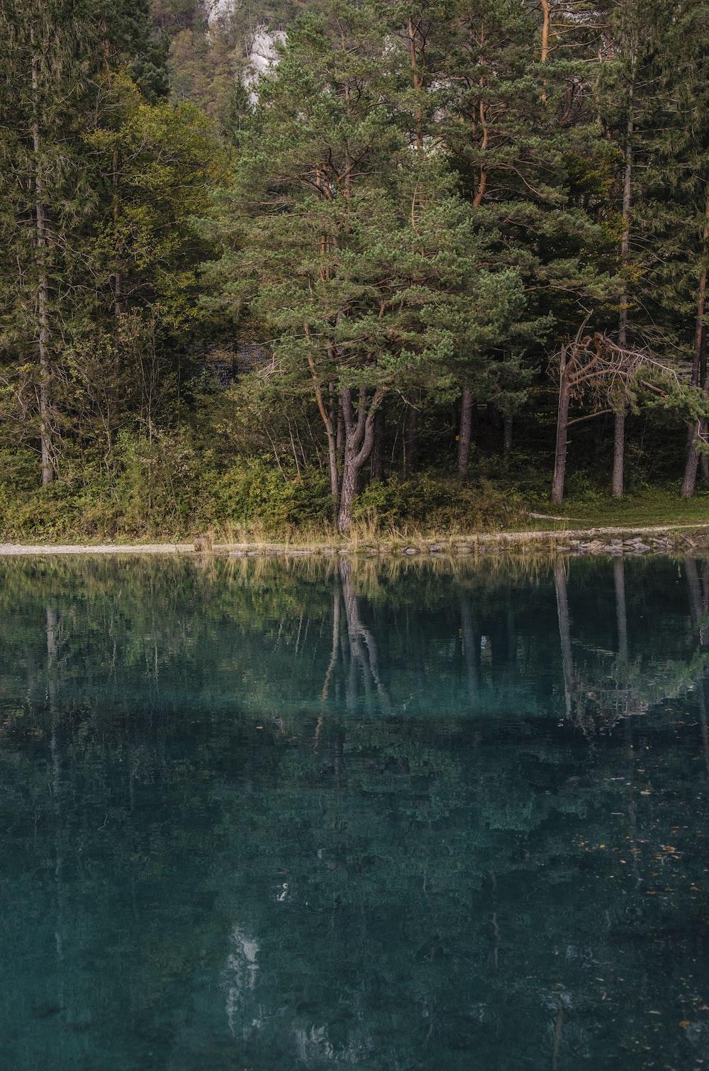trees beside lake