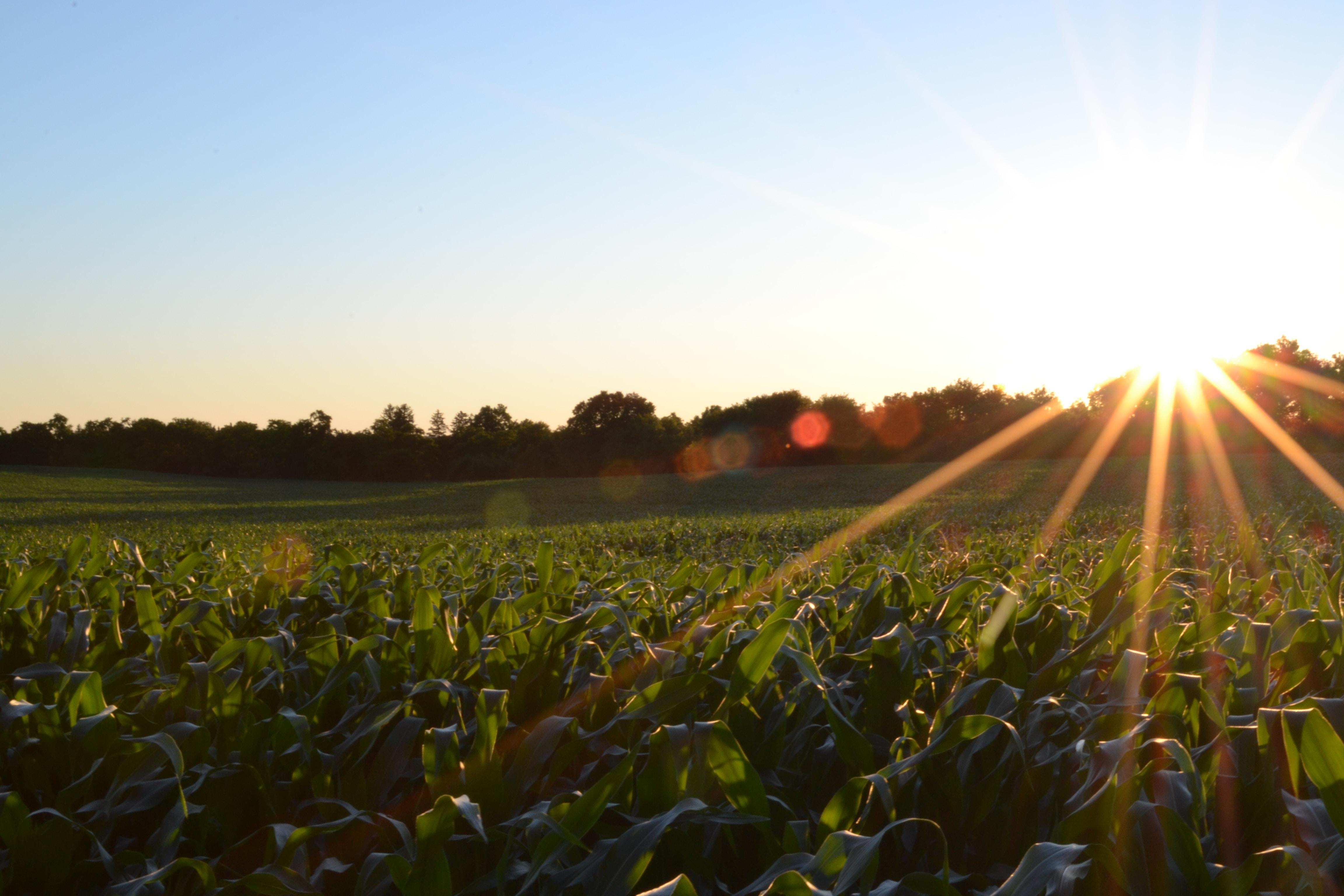 A farm field during sunrise