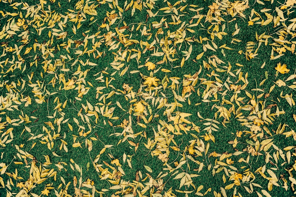 birds eye view of leaves on ground