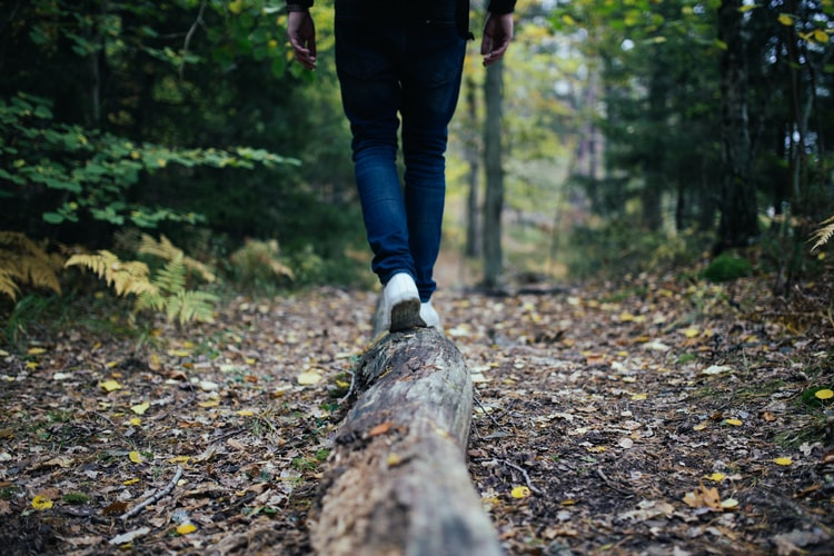 sustainable travel - walking on wood log in forest