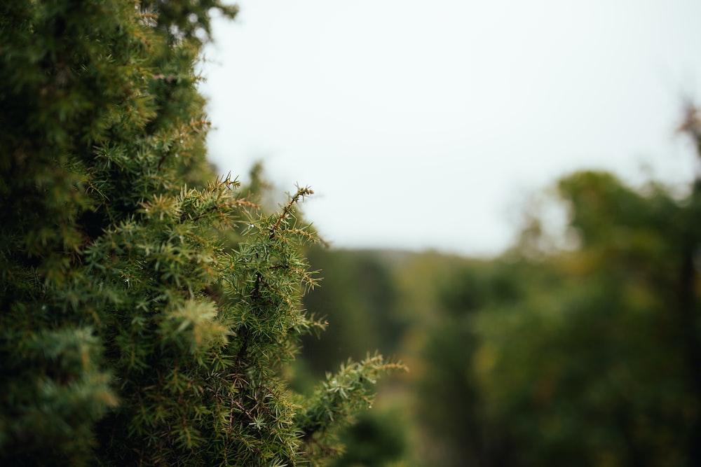green tree leaves
