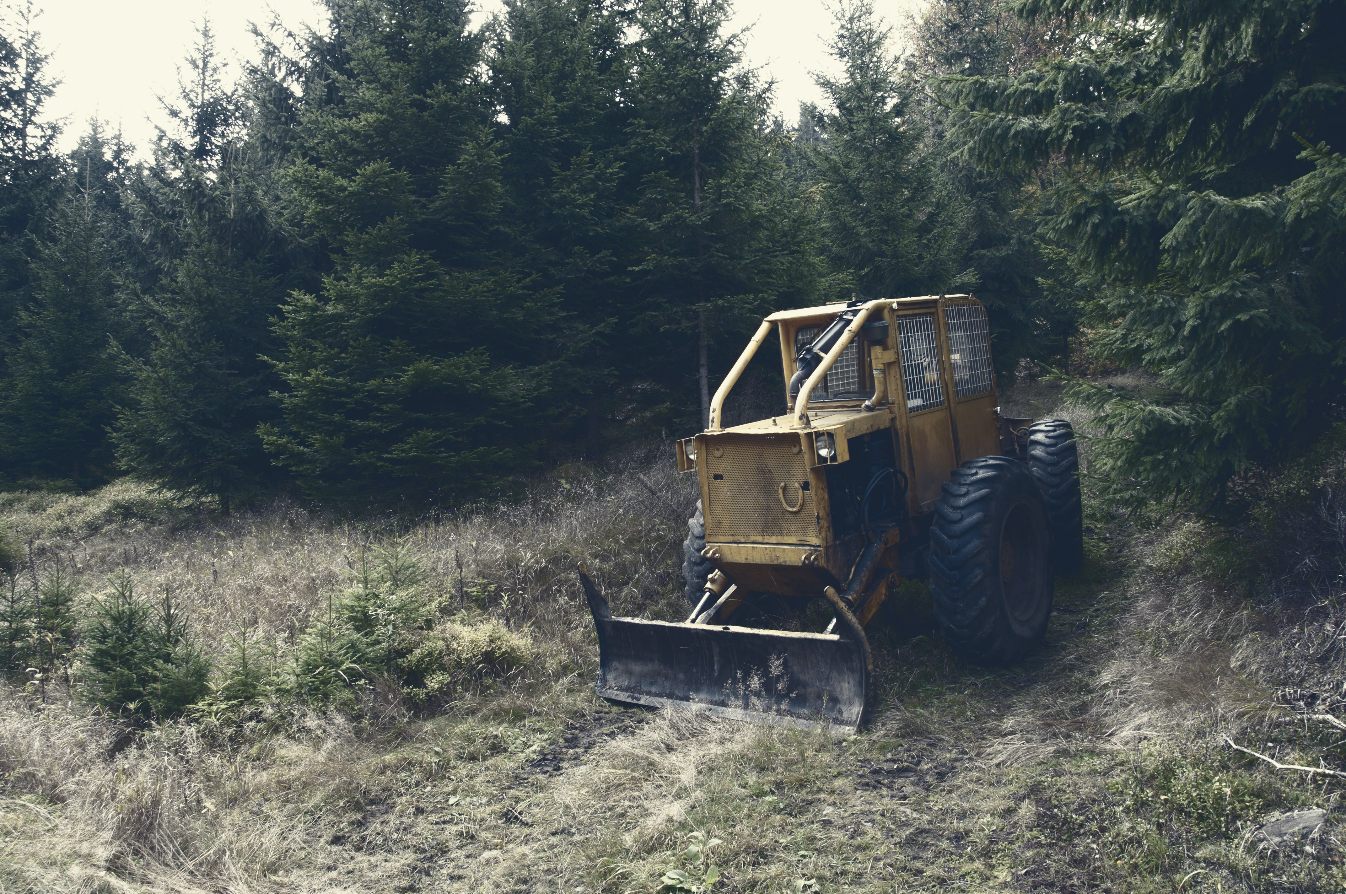 Bulldozer does construction taking down trees in the forest