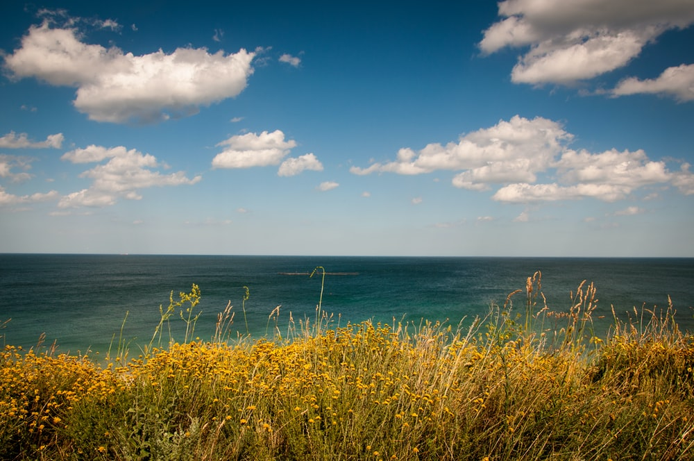 green grass field near sea under white clouds at daytime