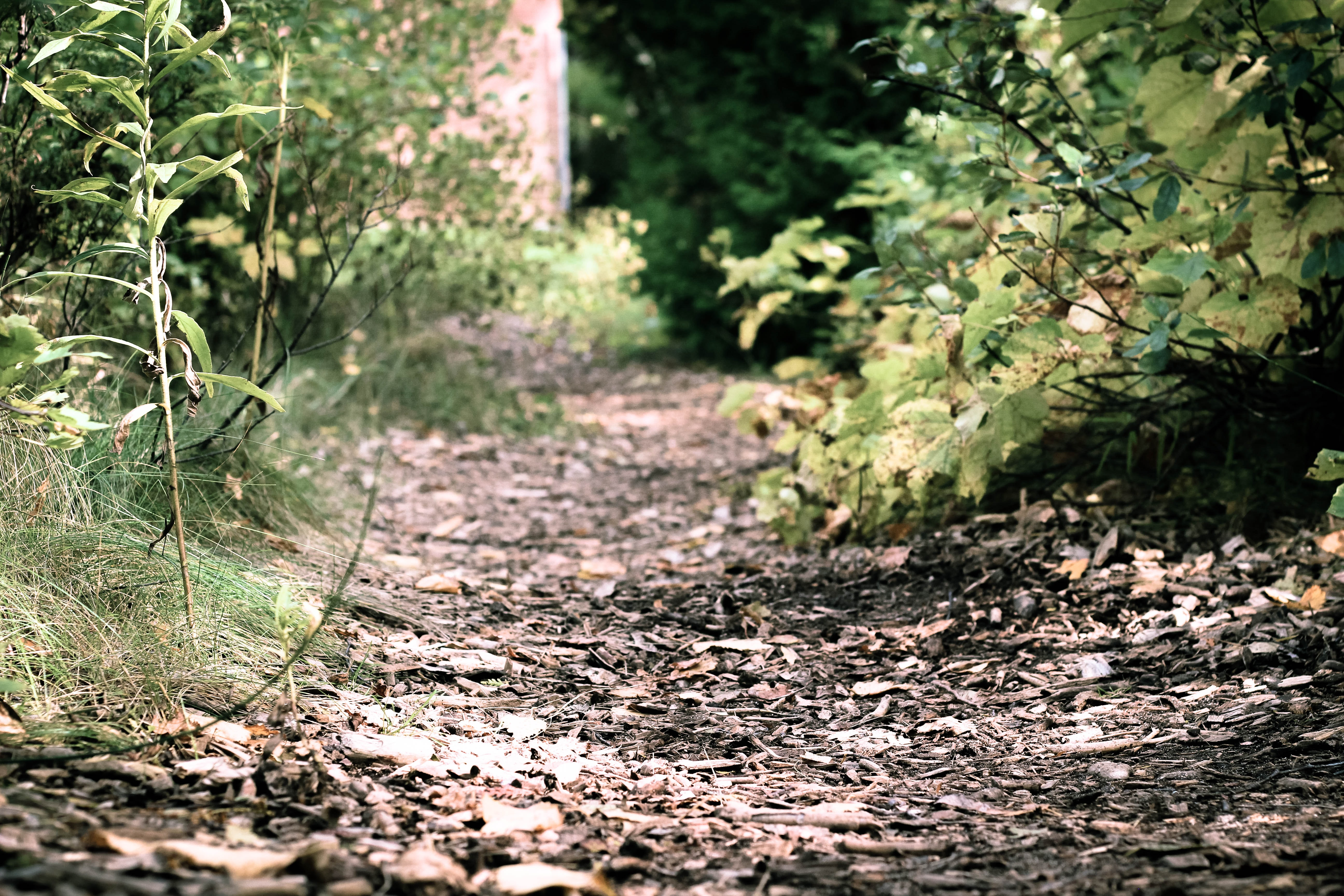 A low shot of a leaf-covered path between green bushes