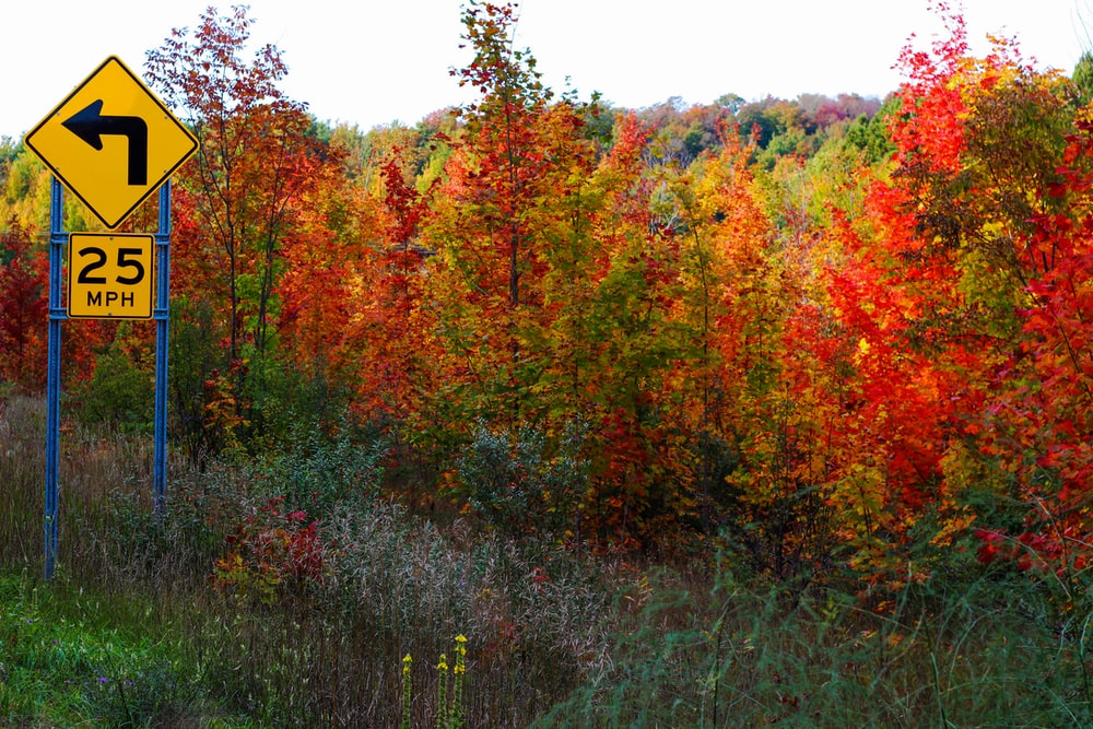 scenery of trees during fall