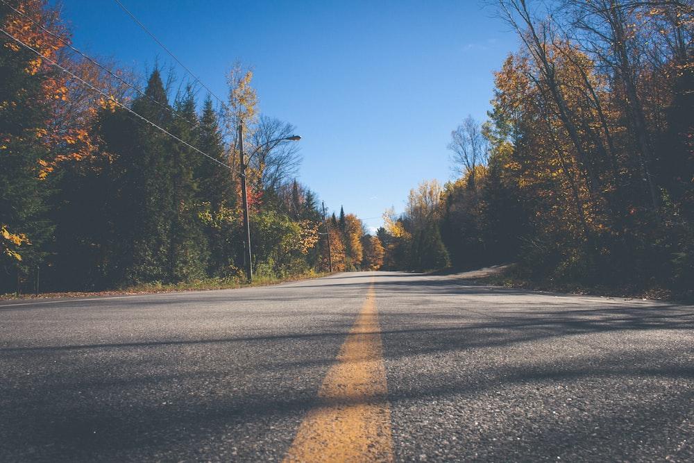 road between trees