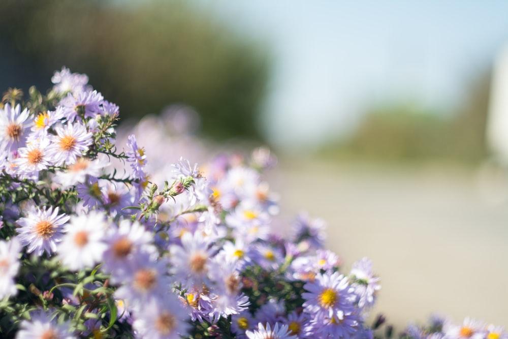 close up photo of purple petaled flowers