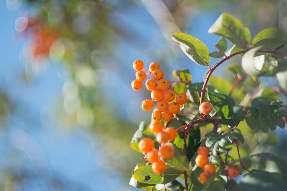 orange fruit close up photo