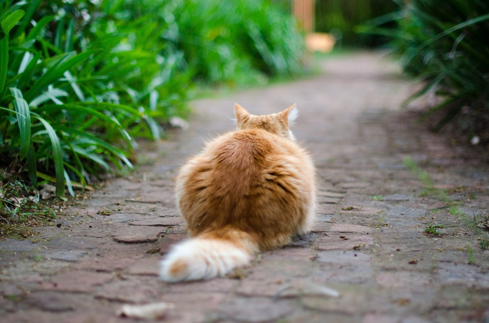 selective focus photography of brown tabby cat on pathway
