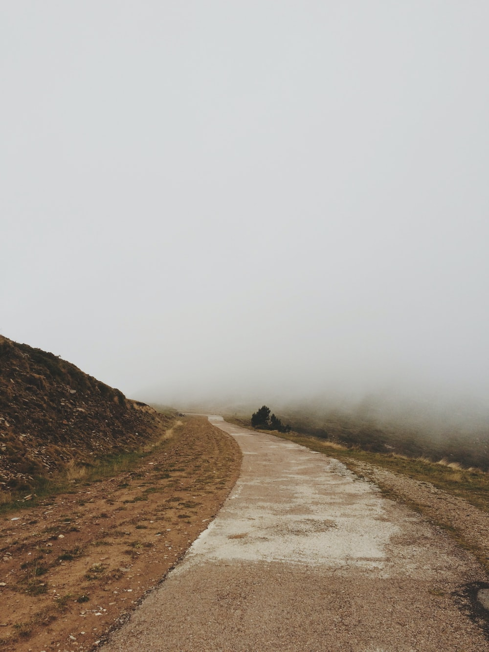 scenery of a road under fog