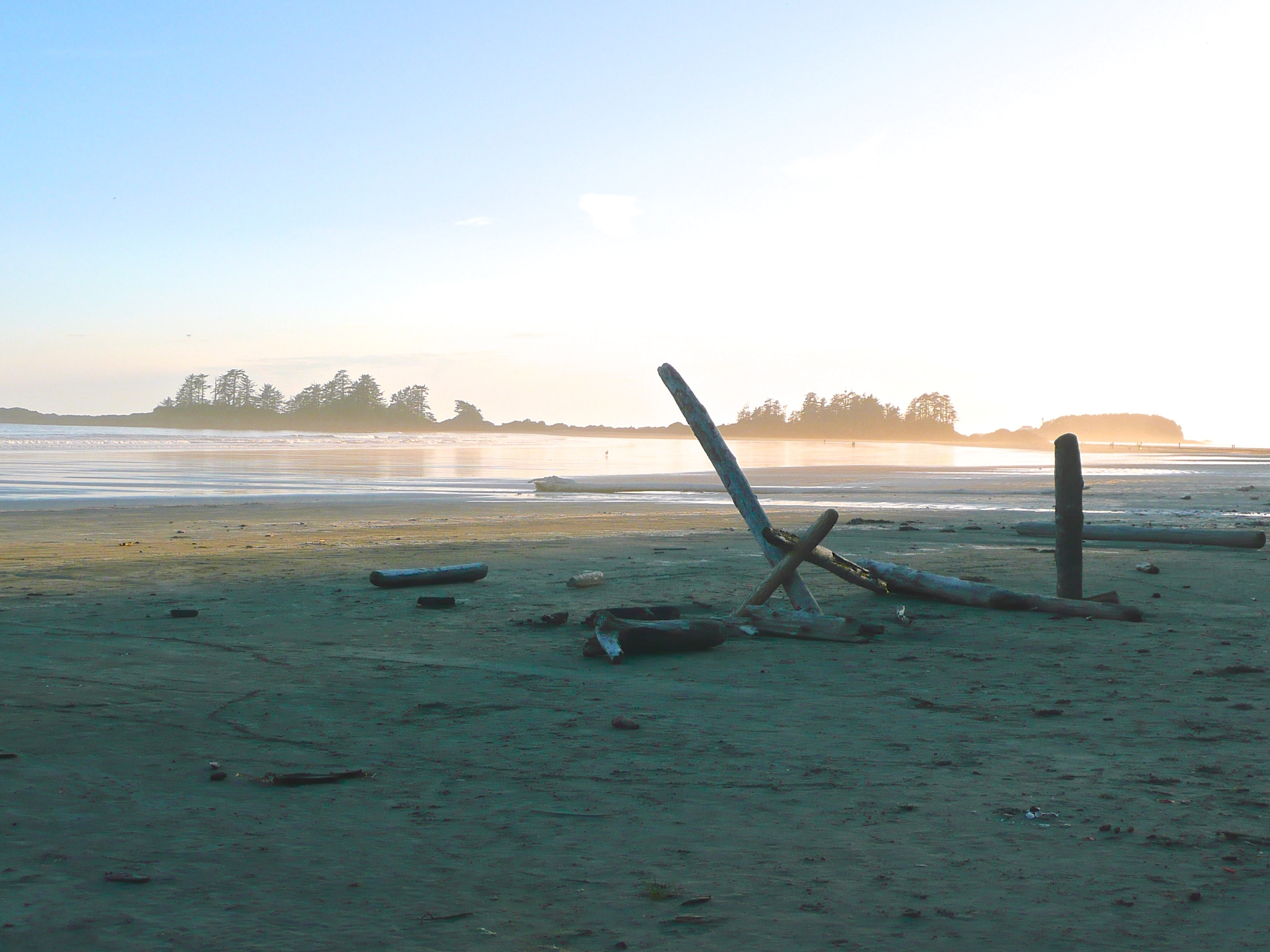 Driftwood at the sand beach in the morning