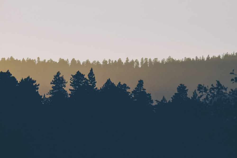 silhouette photography of trees